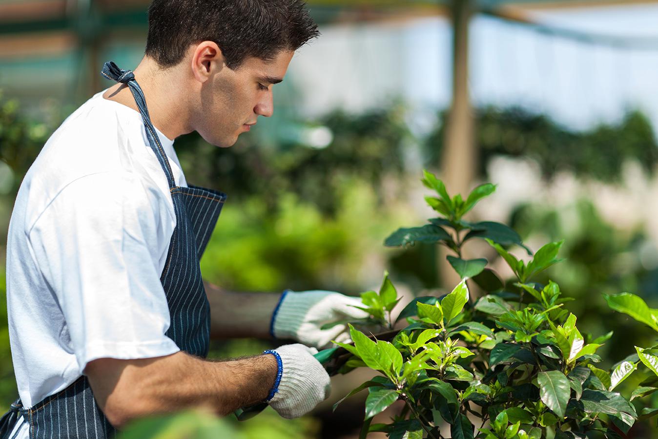 VACATURE: Teeltmedewerker met passie voor planten (regio Bocholt)
