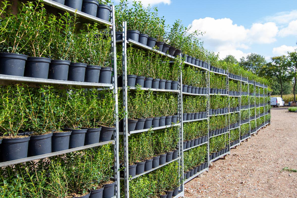 Plantura breidt uit met 14.800 m² extra oppervlakte!