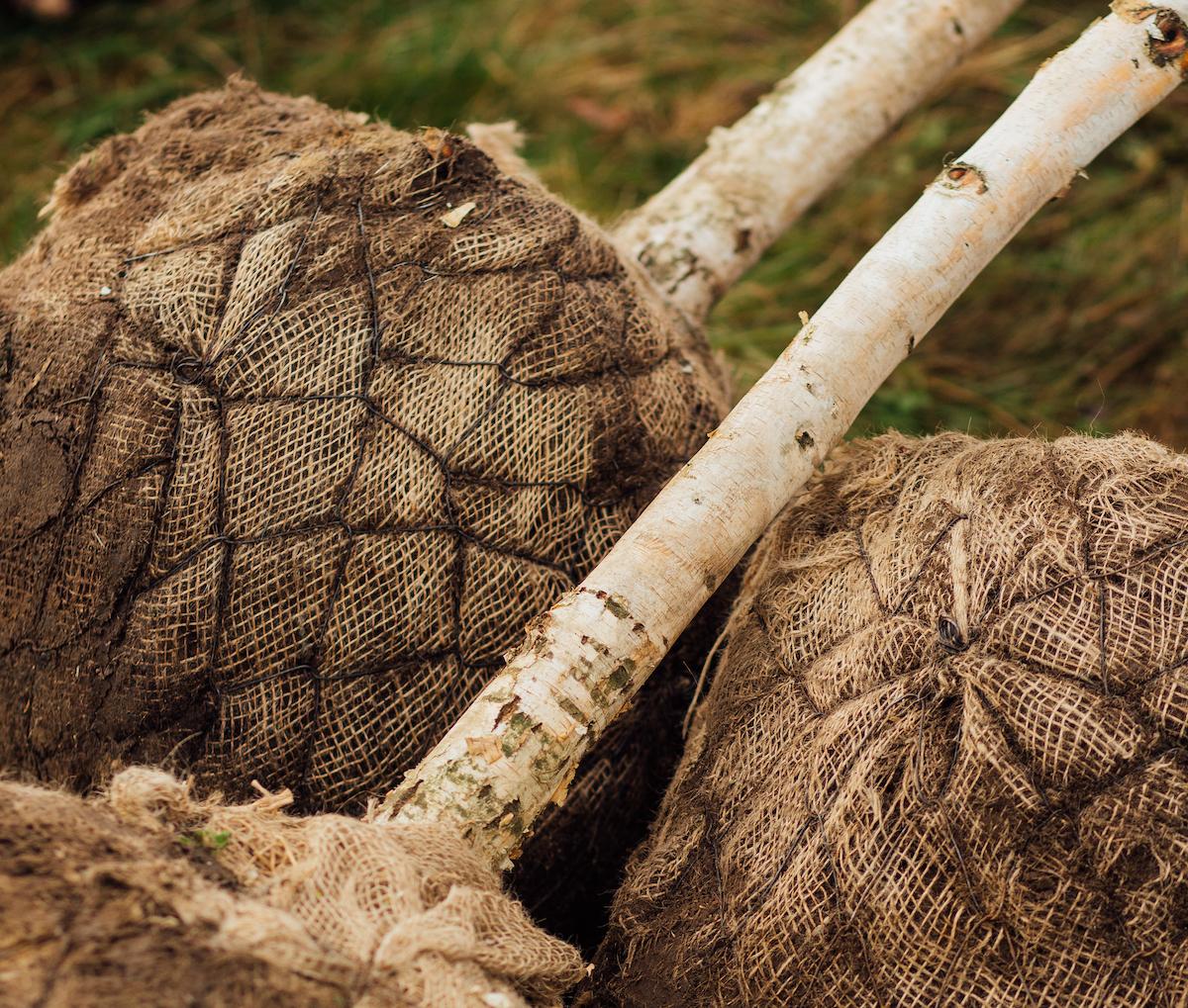 InterBag: de boombewateringszak voor optimale boomirrigatie